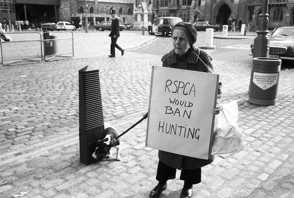 An animal rights protester wearing an RSPCA hunting ban placard in 1988. Picture: Getty