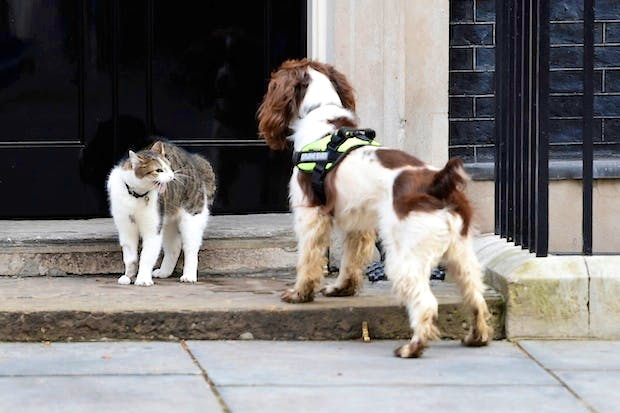 31264255bdb Whatever happened to Larry the Downing Street cat's increased security?