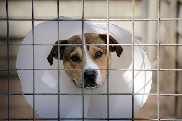 Image of: Animal Cruelty The Rspca May Be Getting Back To What It Does Best Animal Welfare Coffee House Coffee House The Spectator The Rspca May Be Getting Back To What It Does Best Animal Welfare